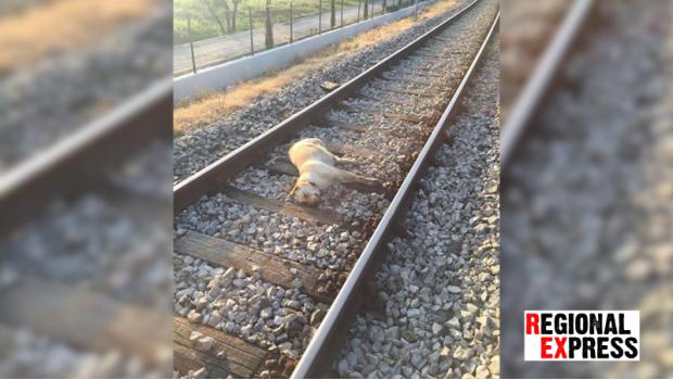 Pse u Vodnjanu pregazio vlak-87826